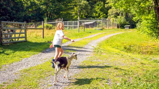 A girl and a goat walking on a path.