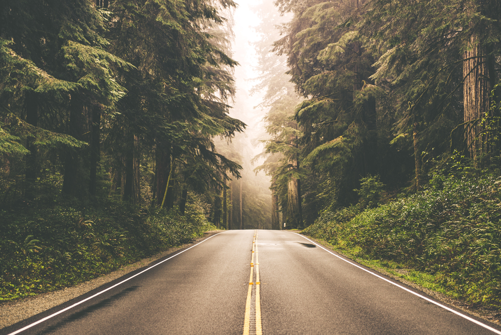 A empty road in the woods.